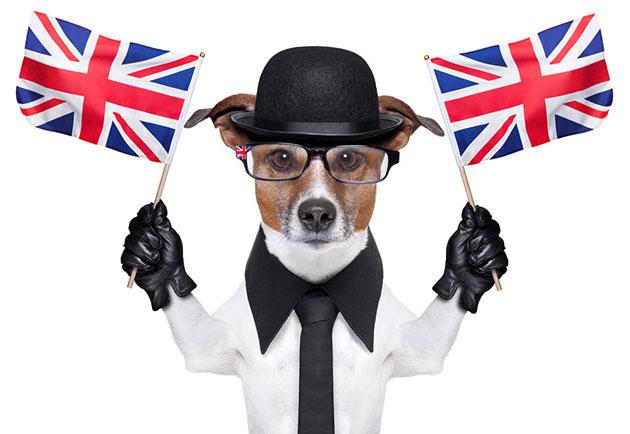 british-dog